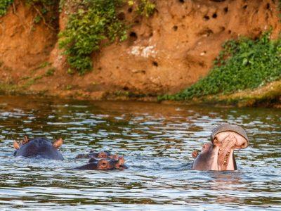 bootsafari-nijlpaarden