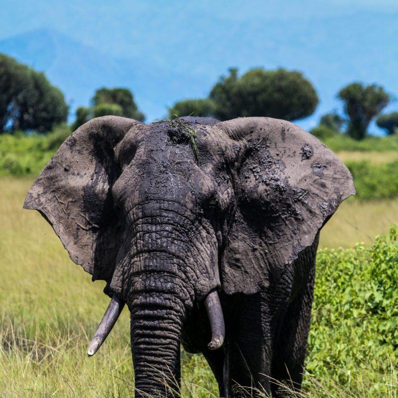 2019-reis-olifant